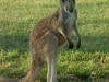 australie-076