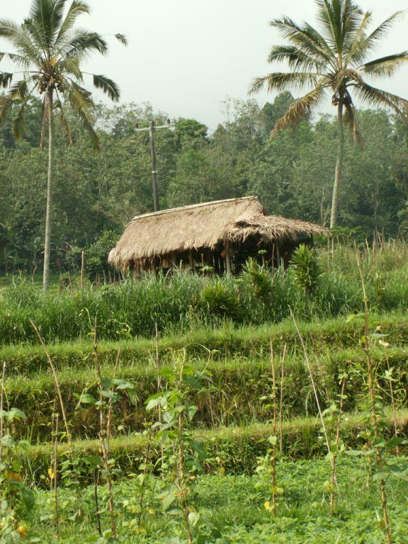 indonesie-15