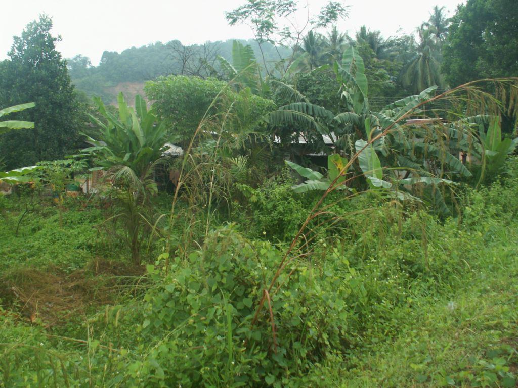 malaisie-38