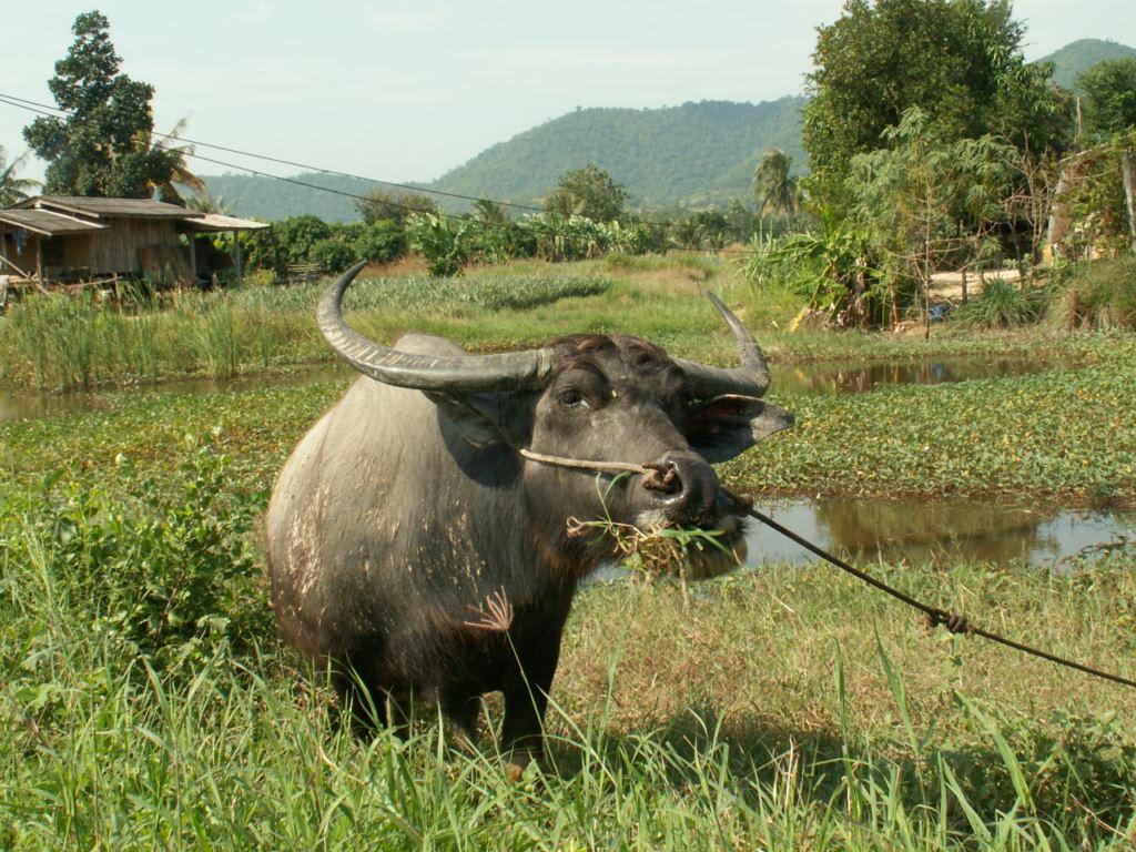 thailande-026