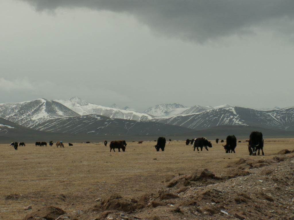 tibet-112