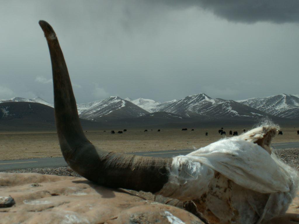 tibet-114