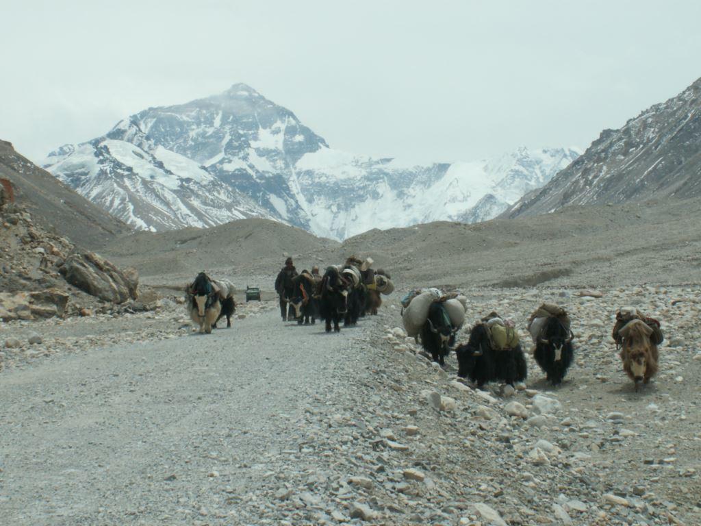 tibet-279
