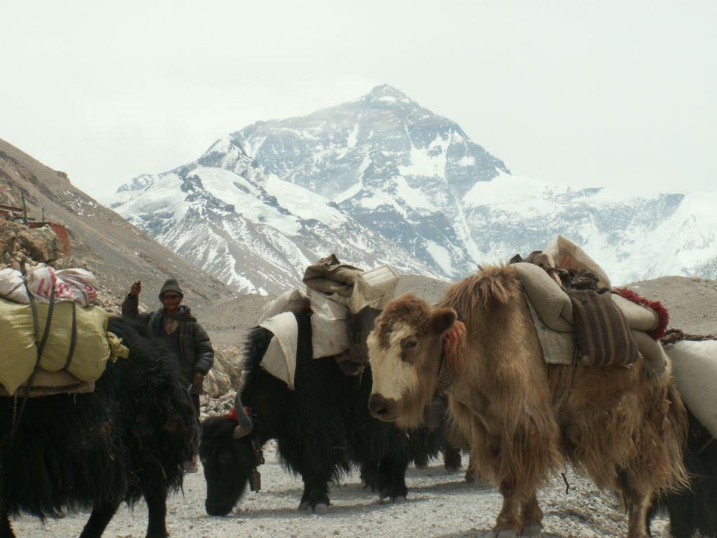 tibet-280