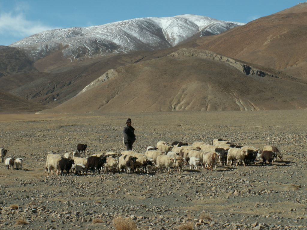 tibet-319