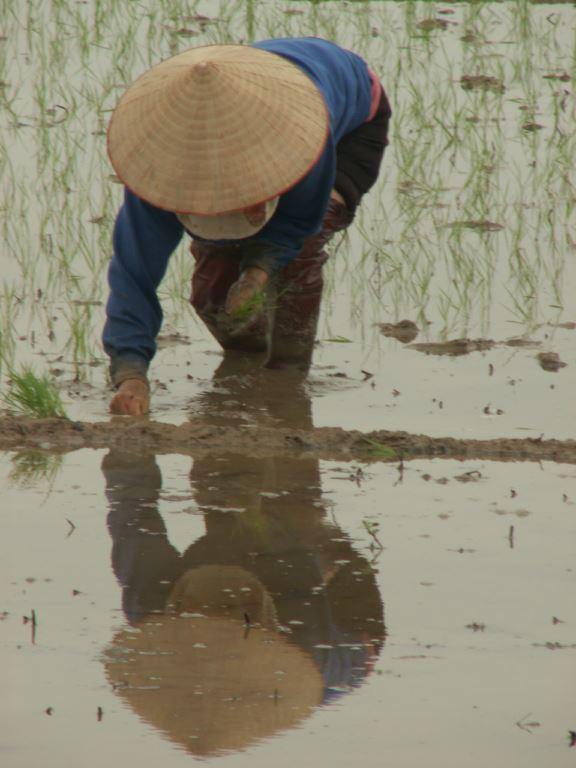 vietnam-184