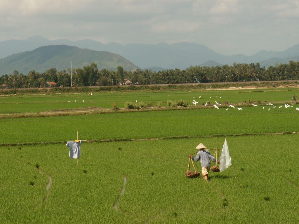 vietnam-057