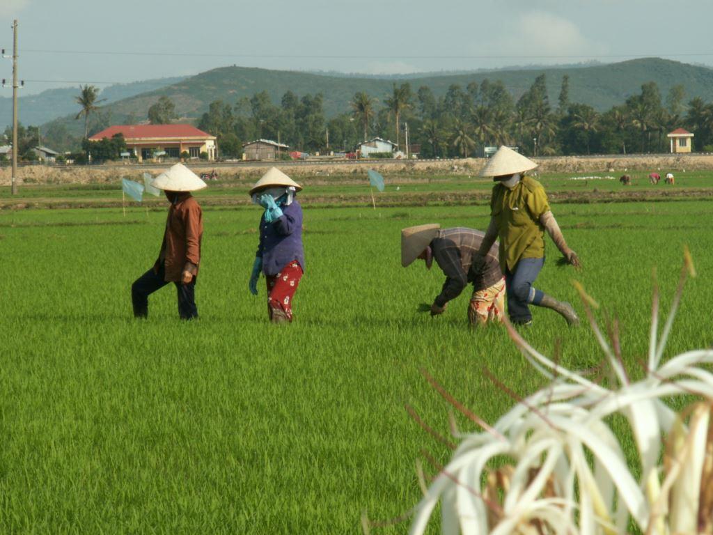 vietnam-058