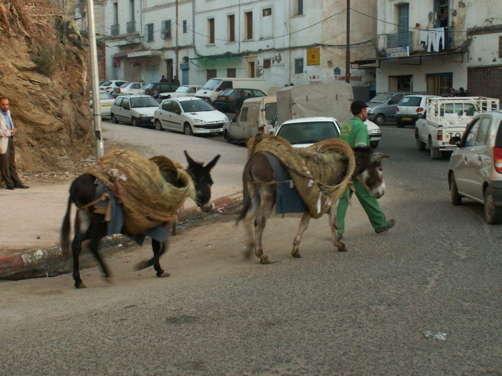 algerie-062